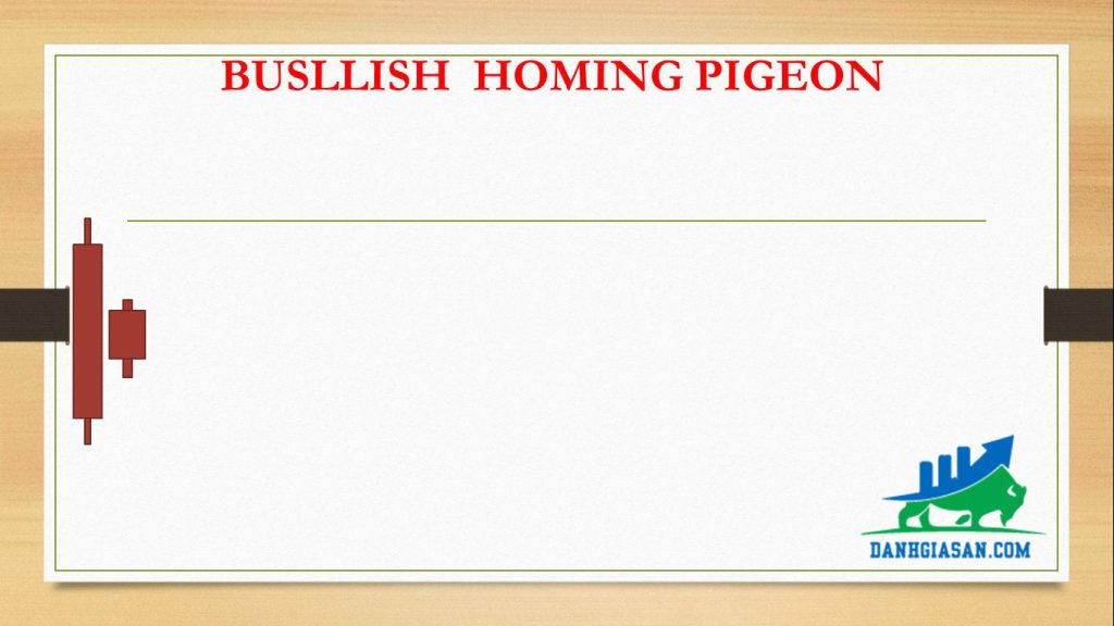BUSLLISH HOMING PIGEON